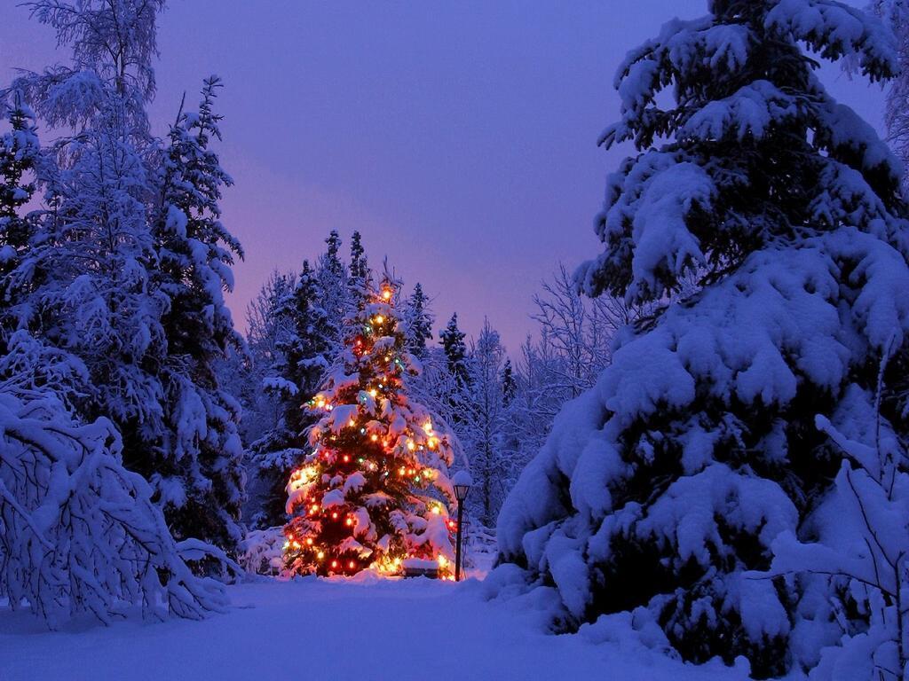 Natale: -90% nella vendita di abeti. bene, invece, le decorazioni per