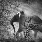 elefante salgado