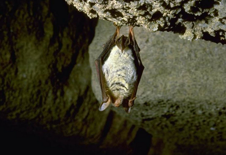 pipistreli-grotta-virus